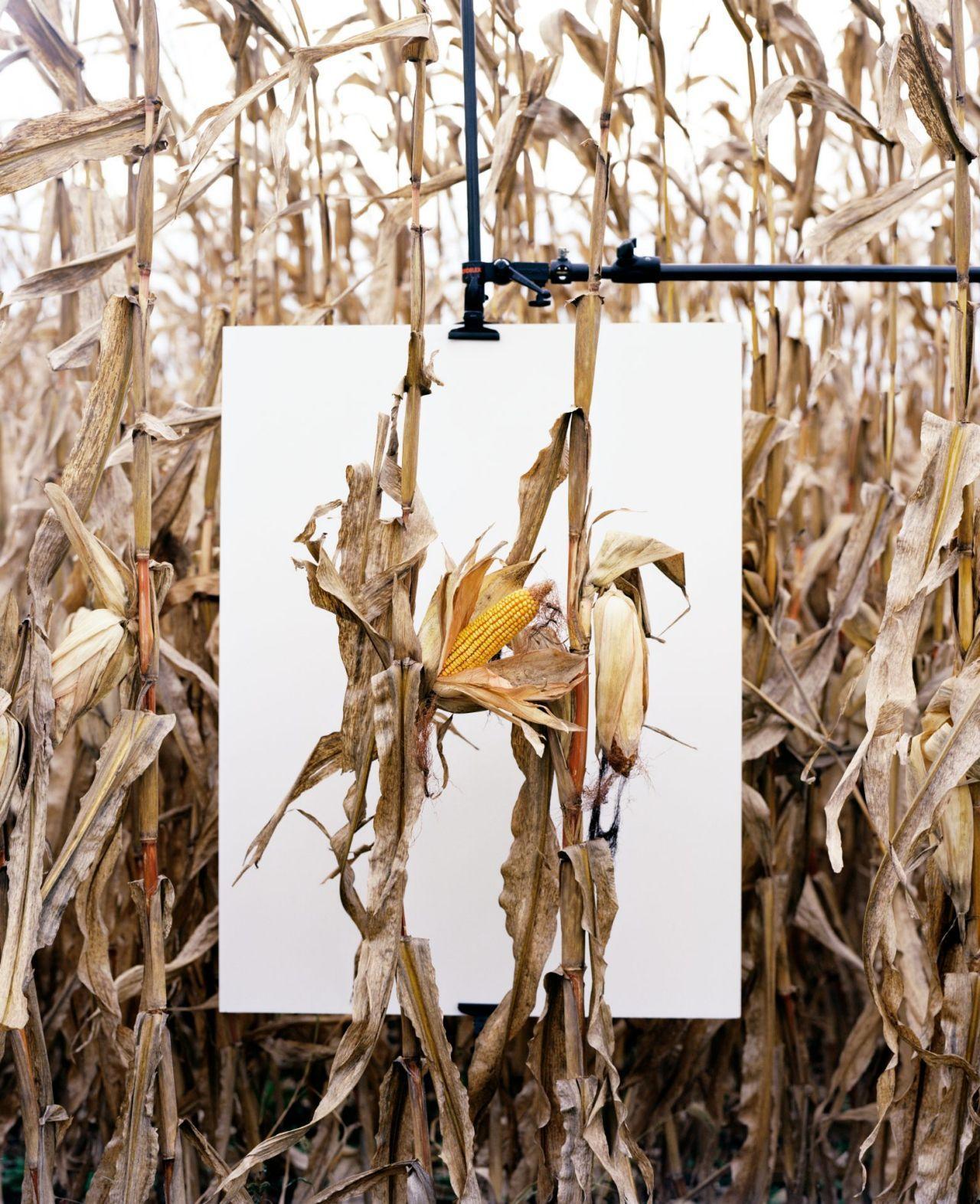 Monsanto®: A Photographic Investigation - Mathieu Asselin
